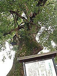 2008嬉野3・瑞光寺3.JPG
