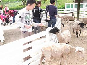 20120519 羊2.jpg
